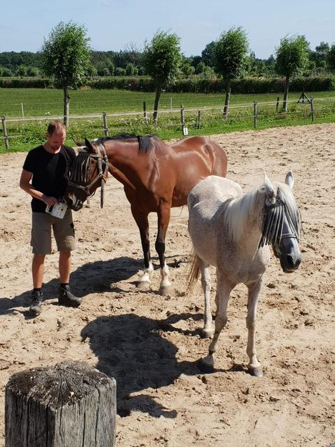 paardebak 1